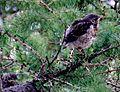 Birds Prešov16Slovakia16.JPG