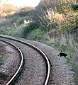 Black cat - geograph.org.uk - 1084728.jpg