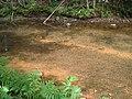 Bloomfield Provincial Park IMG 8257 (1849047632).jpg