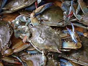 Food and drink prohibitions - Blue crabs, Callinectes sapidus, for sale at a market in Piraeus.