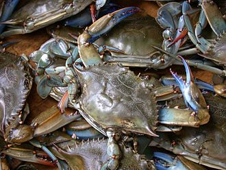 American cuisine - Blue crab was used on the eastern and southern coast of what is now the U.S. mainland.