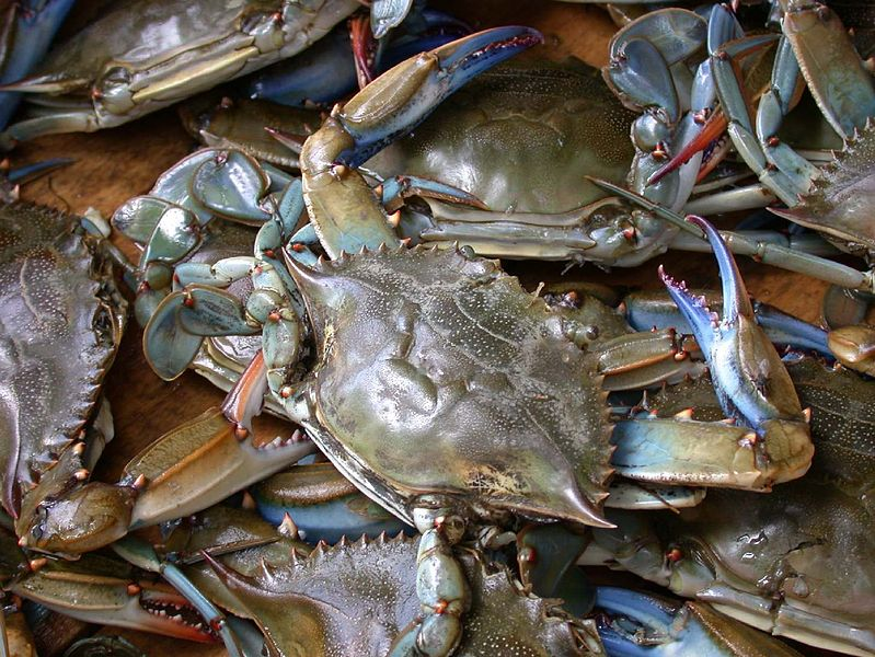 799px-Blue_crab_on_market_in_Piraeus_-_C
