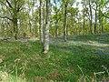 Bluebell Woods (5).jpg