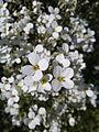 Blumen im Garten.jpg