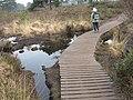 Boardwalk, Upton Heath Nature Reserve - geograph.org.uk - 1233820.jpg