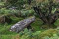 Bodmin Moor, Cornwall-9097.jpg