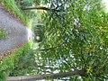 Bornem Barelstraat Jonge Lindendreef (1) - 230201 - onroerenderfgoed.jpg