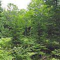 Bose Lake Hemlock Hardwoods NPS.jpg