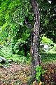 Botanic garden limbe114.jpg