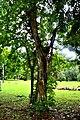 Botanic garden limbe128.jpg