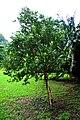 Botanic garden limbe130.jpg