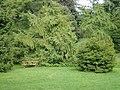 Botanisk Have (bænk).jpg