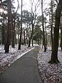 Bournemouth, central path through Horseshoe Common - geograph.org.uk - 1145625.jpg