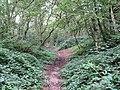 Brambles beside a path through Mousehold Heath - geograph.org.uk - 2061994.jpg