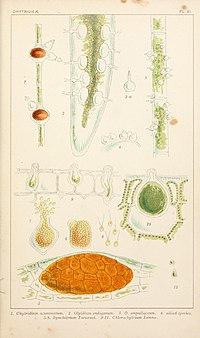 British fresh-water algae, exclusive of Desmidieae and Diatomaceae (1882-1884) (19797204913).jpg