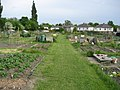 Broadgate Lane Allotments - geograph.org.uk - 836044.jpg
