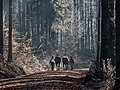 Bruderwald-Winter-PC030149.jpg