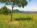 Brzoza na niebieskim szlaku pod Bukowcem - panoramio.jpg