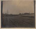 Buffalo in Elk Park, Alberta (HS85-10-19071) original.tif