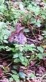 Bunny in my garden.jpg