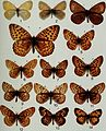 Butterflies and moths of Newfoundland and Labrador - the macrolepidoptera (1980) (20502204682).jpg