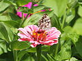 Butterfly on a flower (9185183795).jpg