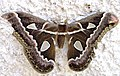 Butterfly on wall.jpg
