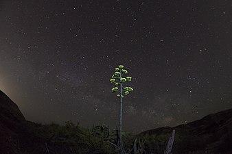 Cabo de Gata Nocturna 2.jpg