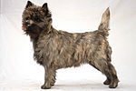 """A small mottled brown dog."""