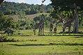 Calauit Wildlife Reserve.jpg