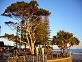 Caloundra Park - panoramio.jpg