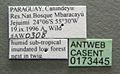Camponotus sanctaefidei casent0173445 label 1.jpg