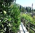 Cannero Riviera Botanischer Garten.jpg