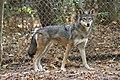 Captive Female at Sandy Ridge (6260981786).jpg