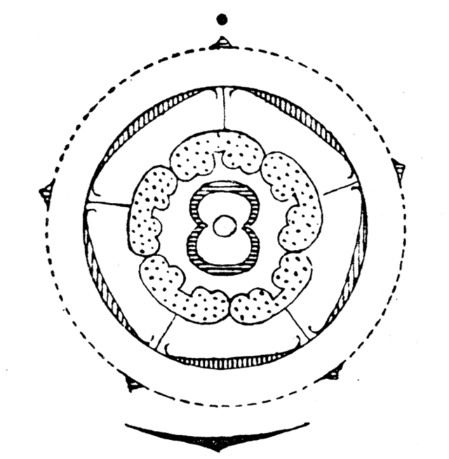 Part Of A Sunflower Diagram