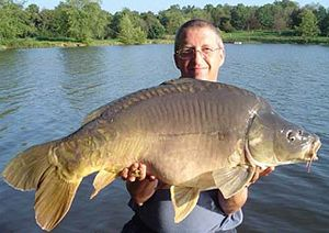 Proud angler with 17 kg Common Carp (Cyprinus ...