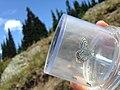 Cascades Butterfly Survey (21013717990).jpg