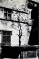Castello di issogne, fontana, fig 90 foto nigra.tiff