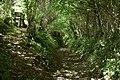 Castle Lane heading towards Nethercott - geograph.org.uk - 2064643.jpg