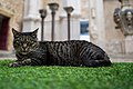 Cat at the Carmo Convent (42789287882).jpg