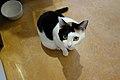 Cats (8258630882).jpg