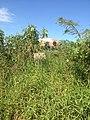 Cemitério de Bongaba - panoramio (1).jpg