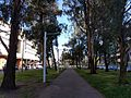 Centre of Northbourne Avenue October 2016.jpg