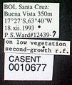 Cephalotes atratus casent0010677 label 1.jpg