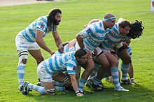 Facing right a group of seven men, in blue and white hooped jersesy, bind together and crouch to form a scrum, the eighth player stands behind them observing the off-picture opposition.