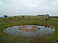 Chanctonbury Dew Pond.jpg