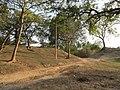 Chandraketugarh Mound - Berachampa 2012-02-24 2508.JPG
