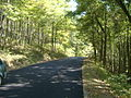 Charlestown State Park Road Hill.jpg