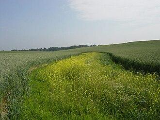 Grassed waterway - Grassed waterway in Velm, Belgium, during a sunny day