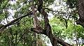 Chinnar River - panoramio (6).jpg